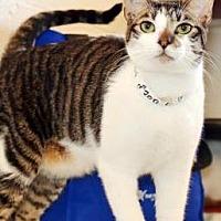 Adopt A Pet :: Nalu - Vancouver, WA