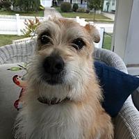 Adopt A Pet :: Tabitha - Cuyahoga Falls, OH