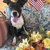 Adopt A Pet :: Juniper - Toluca Lake, CA