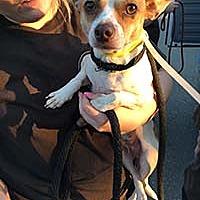 Adopt A Pet :: Sasha from Harvey - Chantilly, VA