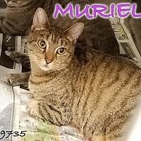 Adopt A Pet :: Muriel - Oak Ridge, TN