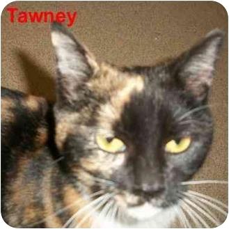 Calico Kitten for adoption in Slidell, Louisiana - Tawney