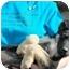 Photo 3 - German Shepherd Dog Mix Puppy for adoption in Dripping Springs, Texas - Burton