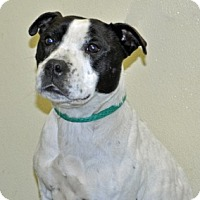 Adopt A Pet :: Charlotte - Port Washington, NY