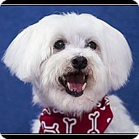 Adopt A Pet :: Baxter - Fort Braff, CA