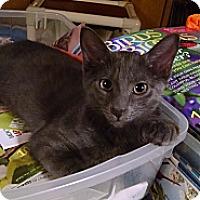 Adopt A Pet :: Troy - Port Republic, MD