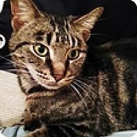 Adopt A Pet :: Linton ll - Vancouver, BC