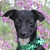 Adopt A Pet :: Pia - Winters, CA