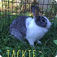 Adopt A Pet :: Jackie - Elizabethtown, KY