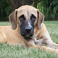 Adopt A Pet :: Indy - Aurora, IL