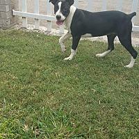 Adopt A Pet :: Lane - Uxbridge, MA