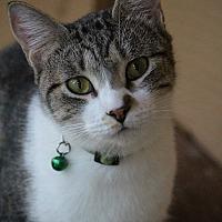 Adopt A Pet :: Bosque - Colorado Springs, CO