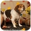 Photo 1 - Beagle Mix Dog for adoption in Norman, Oklahoma - Depot