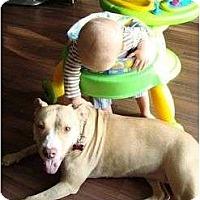 Adopt A Pet :: Lulu - Hoffman Estates, IL