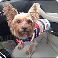 Adopt A Pet :: Elmo - Fairfax, VA