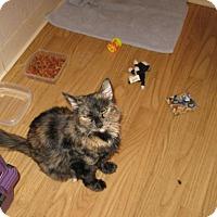 Adopt A Pet :: Onyx - Sacramento, CA