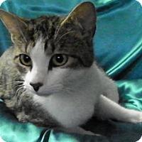 Adopt A Pet :: Tammie - Alexandria, VA