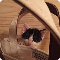 Adopt A Pet :: Whispurr: urgent - Cranford/Rartian, NJ