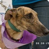 Adopt A Pet :: Pat C Mellow - Knoxville, TN