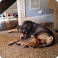 Adopt A Pet :: Zeus - North East, FL