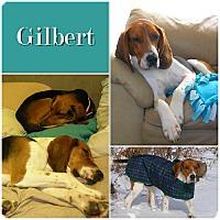 Adopt A Pet :: Gilbert ADOPTED! - Ontario, ON