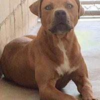 Adopt A Pet :: Foster - Manhattan, KS