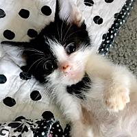 Adopt A Pet :: Dot - Hinton, OK