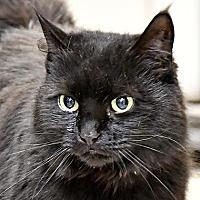 Adopt A Pet :: Tilly - Fairport, NY