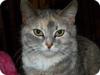 Calico Cat for adoption in Stafford, Virginia - Violet