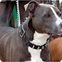 Adopt A Pet :: Mic - Carneys Point, NJ
