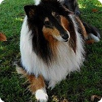 Adopt A Pet :: Gracie - La Habra, CA