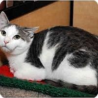 Adopt A Pet :: Timmy - Farmingdale, NY