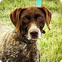 Adopt A Pet :: Princess - Cheyenne, WY