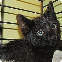 Adopt A Pet :: Sparrow - Acme, PA