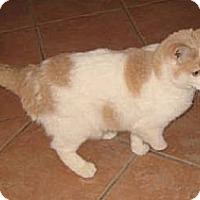 Adopt A Pet :: Stumpy - Chandler, AZ