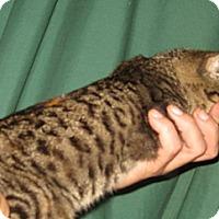 Adopt A Pet :: Safrin - Dallas, TX