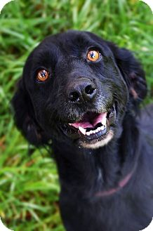 Spaniel (Unknown Type) Mix Dog for adoption in Fort Smith, Arkansas - Loulou
