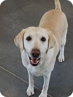 Retriever (Unknown Type)/Golden Retriever Mix Dog for adoption in Farmington, New Mexico - Molly