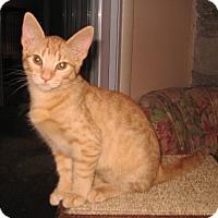Adopt A Pet :: Miley - Colmar, PA