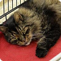 Adopt A Pet :: Leo - Scituate, MA