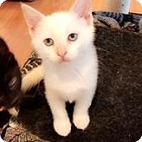 Adopt A Pet :: Fig - Anaheim Hills, CA