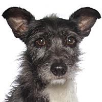 Adopt A Pet :: Balla - oakland park, FL