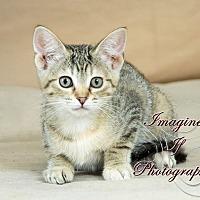 Adopt A Pet :: Mouse - Crescent, OK