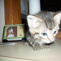 Adopt A Pet :: 35799472 - Clinton, MO