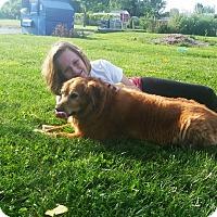 Adopt A Pet :: Posey - Elyria, OH
