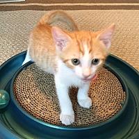 Adopt A Pet :: Alex - Orange, CA