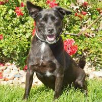 Adopt A Pet :: Steve - Grand Island, NE