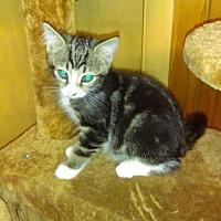 Adopt A Pet :: Robbie (baby boy) - Harrisburg, PA