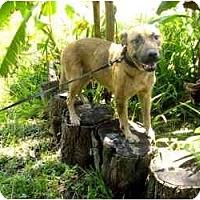Adopt A Pet :: C.J. - Orlando, FL