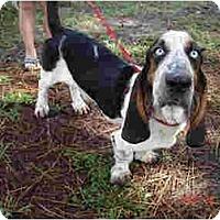 Adopt A Pet :: Al - Kingwood, TX